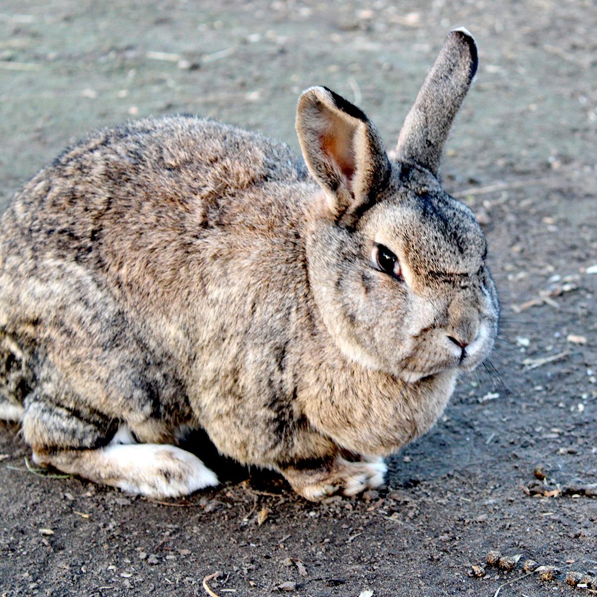 adopteer een konijn_7931