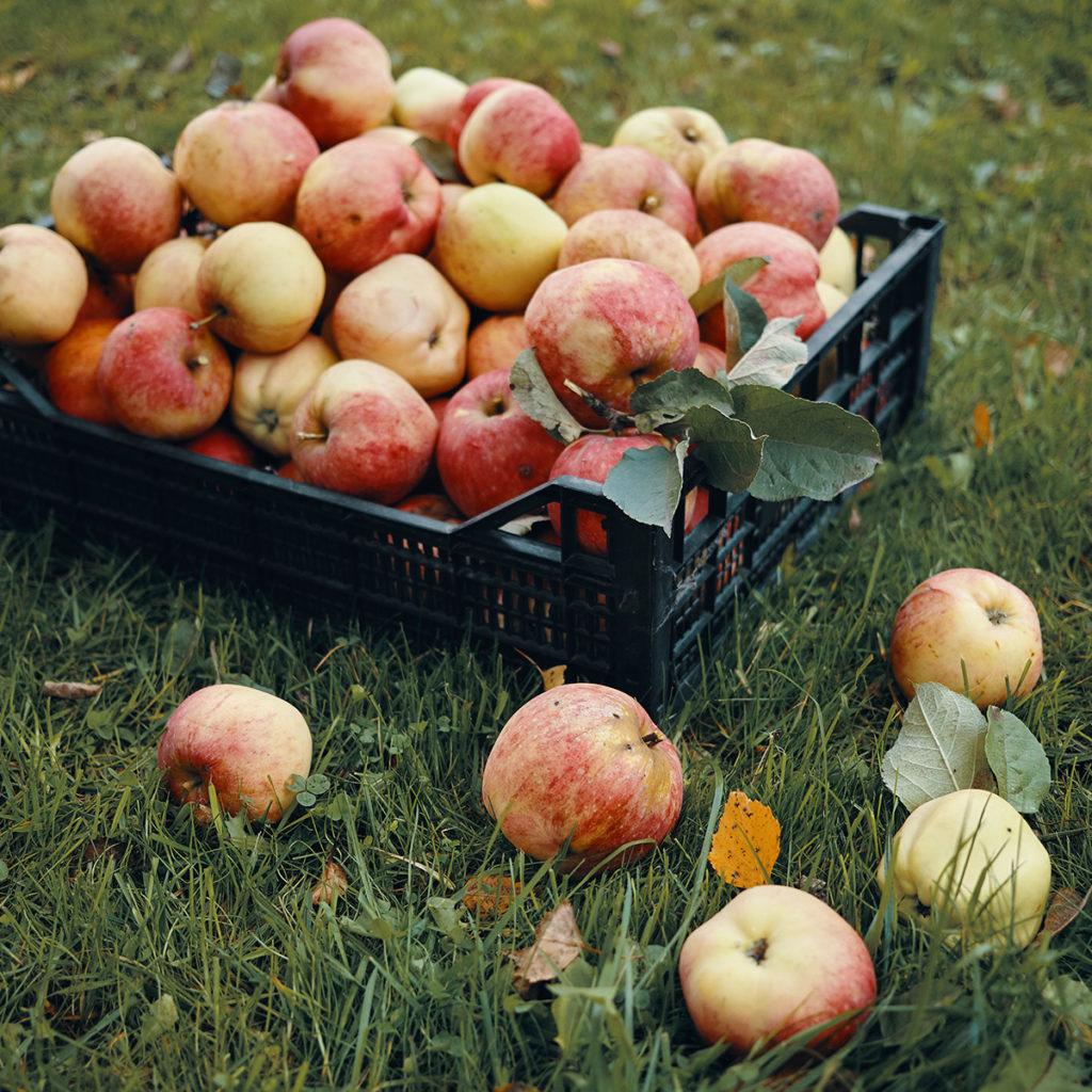 1 krat appels voor de varkens