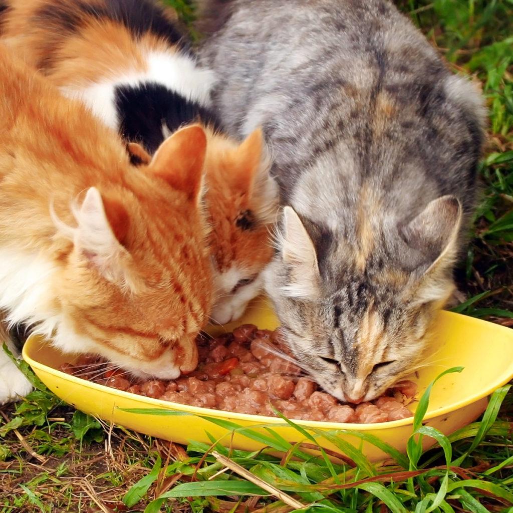 doneer voeding aan de katten en boerderijdieren van Het Dierenthuisje_433660852