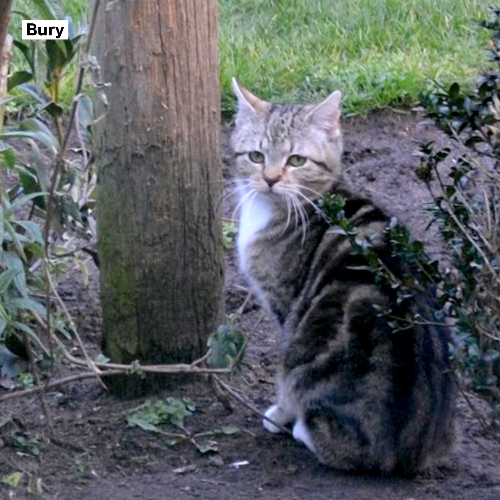 meter_peter_11 Bury