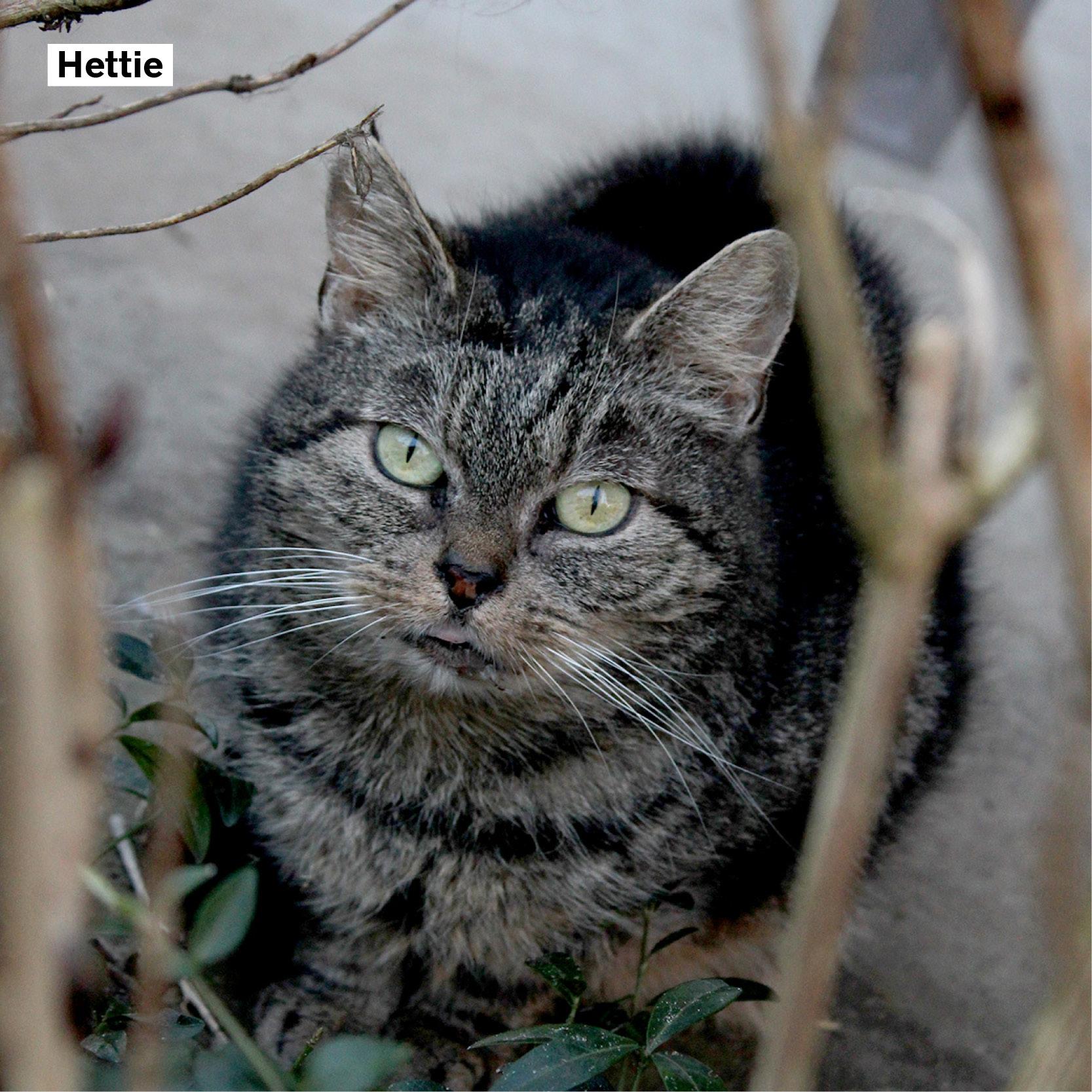 meter_peter_20 Hettie