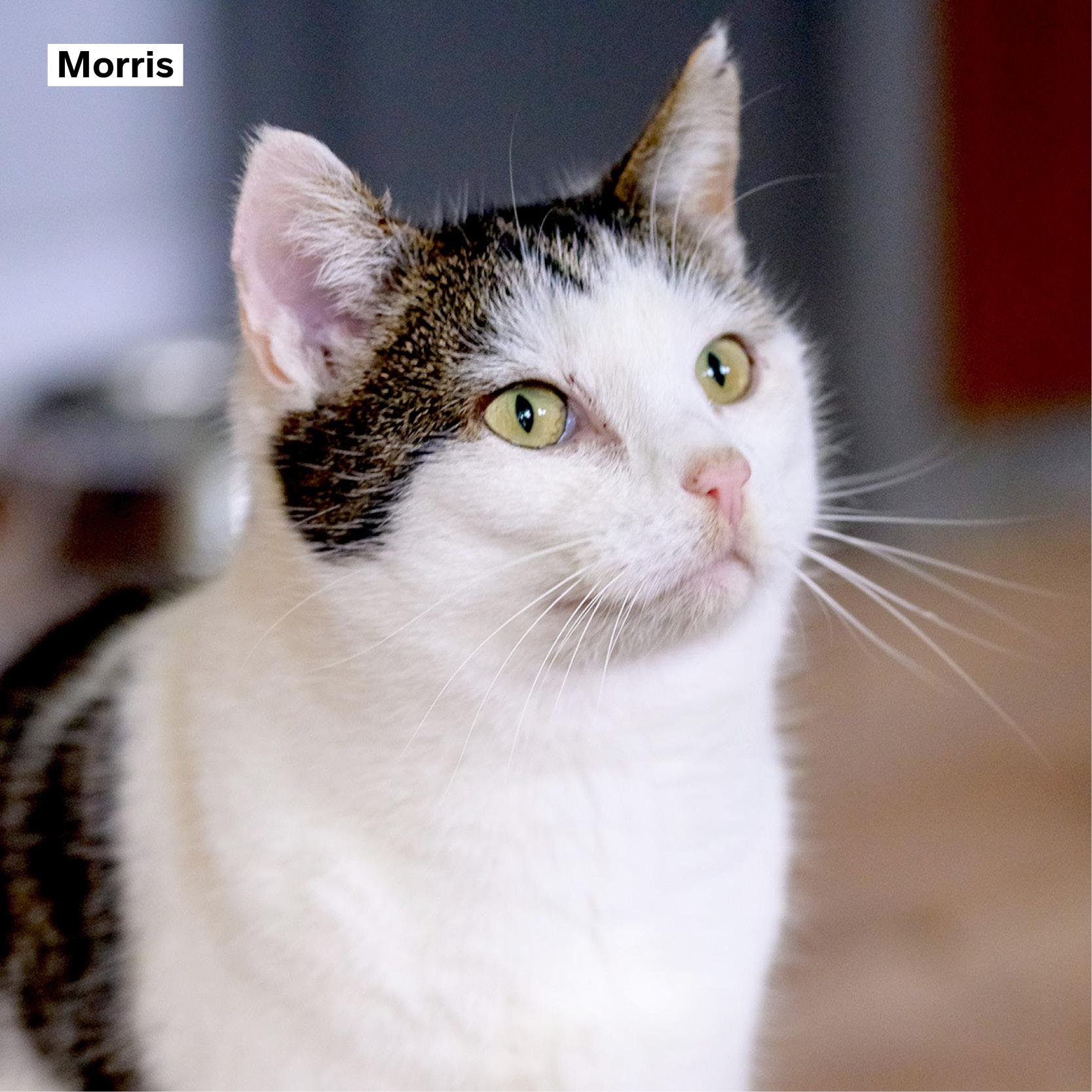 meter_peter_38 Morris